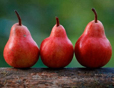 Déjate seducir por los encantos de la pera